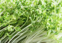Agrião – Versátil e nutritivo