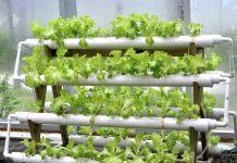 Horta Doméstica com tubos de PVC - Como Fazer