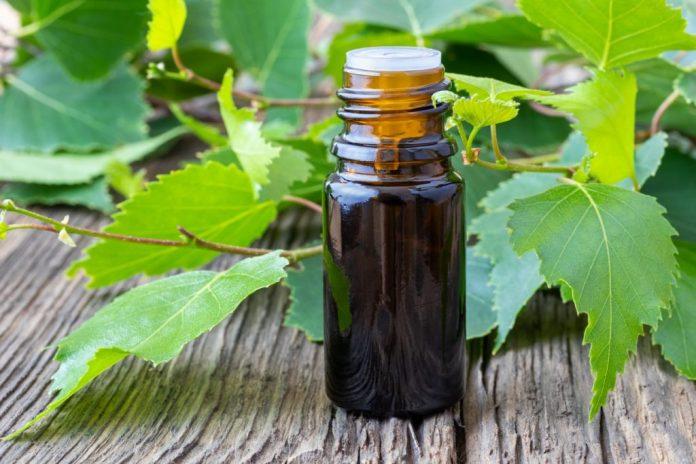 Óleo de Bétula – Benefícios para a saúde