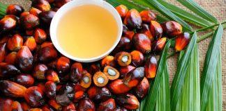 Azeite de Dendê – 5 motivos para incluir na dieta