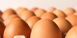 Ovos – A maneira correta de armazená-los