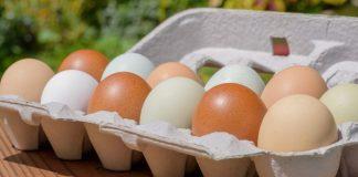 Ovos – Características dos diferentes tipos disponíveis no mercado