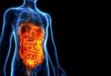 Como ajudar o intestino a funcionar melhor