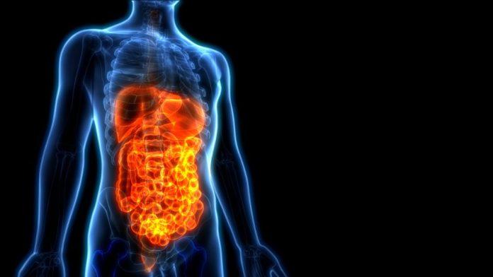 Sistema Digestório – O que muda na Terceira Idade