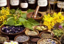 Plantas que contribuem para melhora da memória