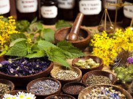 Plantas medicinais - Conheça as mais famosas e seus benefícios