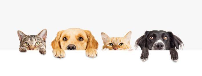 A Terceira Idade e os animais de estimação