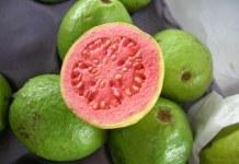 Goiaba – A fruta de ouro