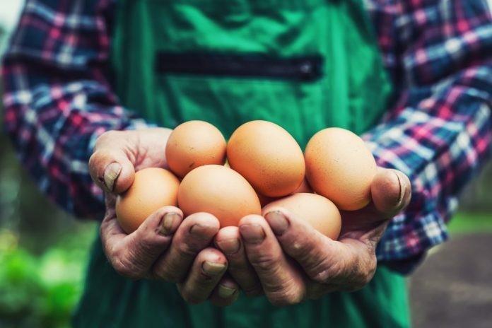 Comer ovos diariamente faz bem à saúde - Veja