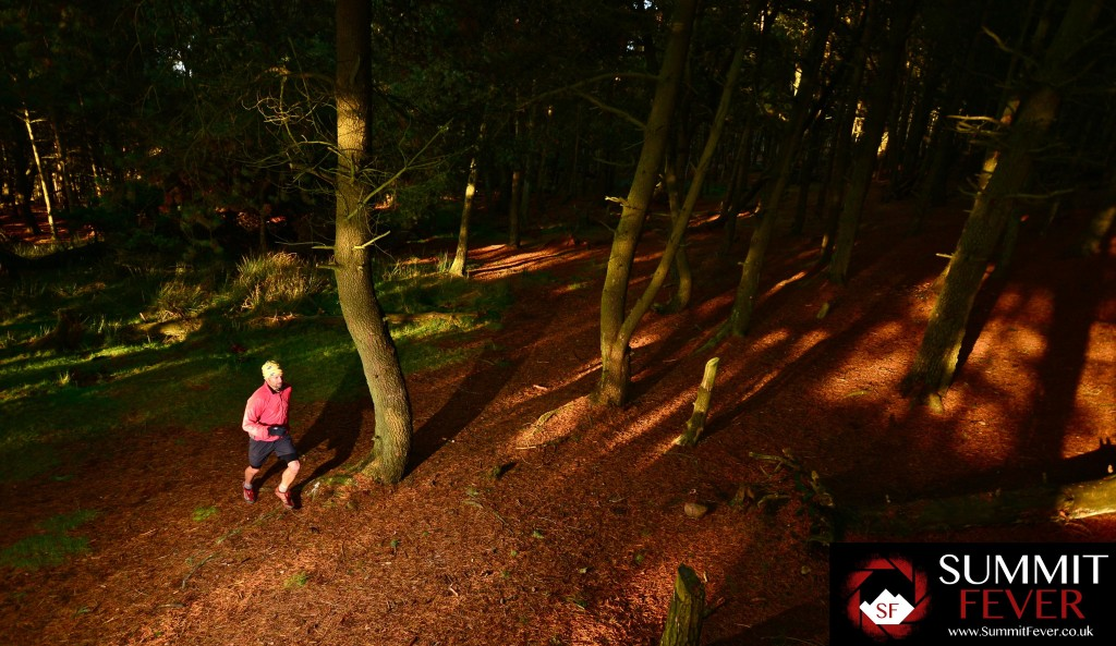 trail running through trees