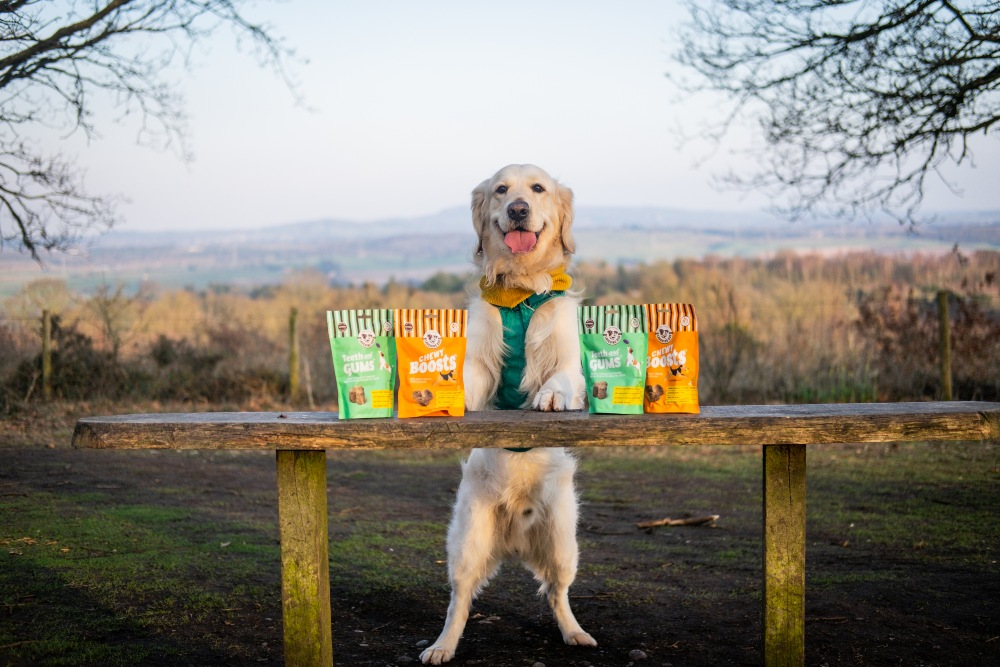 Keep your dogs happy and healthy this summer