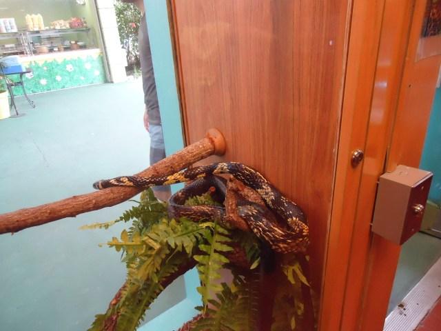 Serpiente en el Zoo de Miami