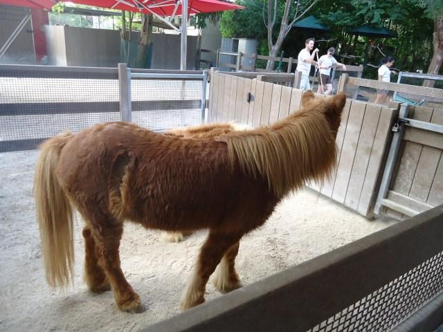 Ponny en el Zoo de Miami