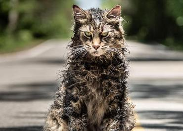 pet sematary cat actors church
