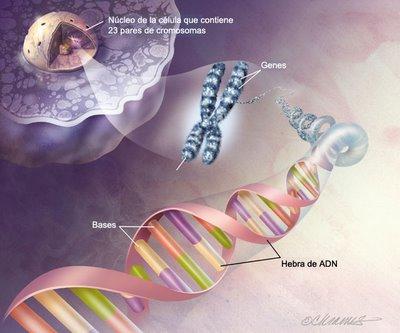 enfermedad genetica
