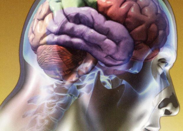 cerebelo