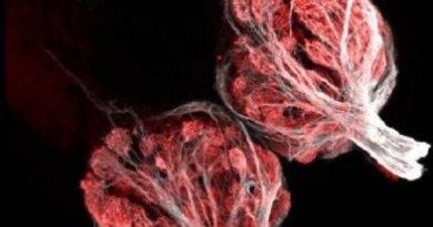 celulas olfativas