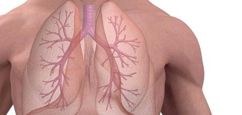 fibrosis pulmonar