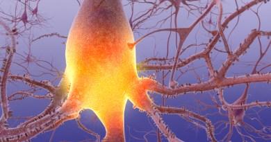 Polineuropatía amiloide familiar