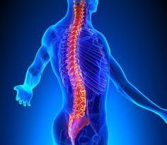 Síndrome isquio-vertebral