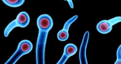 El tétanos es una enfermedad infecciosa causada por la bacteria anaerobia Clostridium tetani y caracterizada por espasmos y contracturas de los músculos esqueléticos.