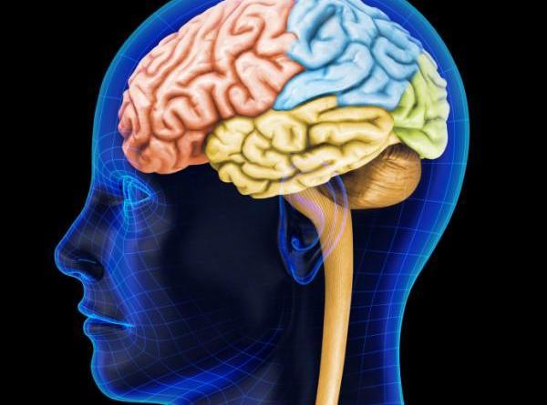 Narcolepsia sin cataplexia