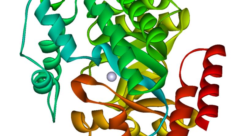 Deficiencia de adenosina monofosfato deaminasa