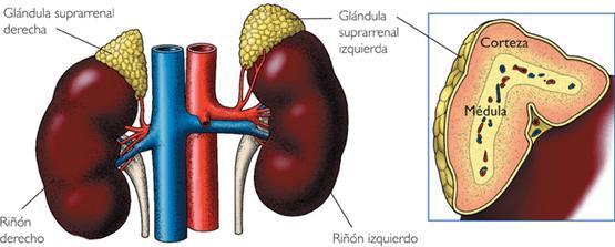 Insuficiencia suprarrenal crónica primaria