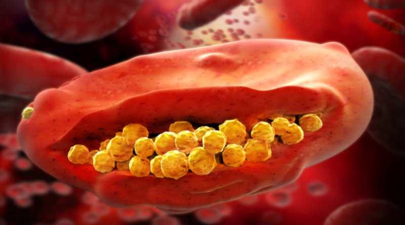 Farmaco-unica-dosis-evita-recaida-malaria-en-afectados