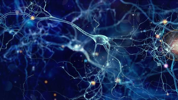 Nueva variación genética que causa la enfermedad de las neuronas motoras descubierta en una nueva vía biológica