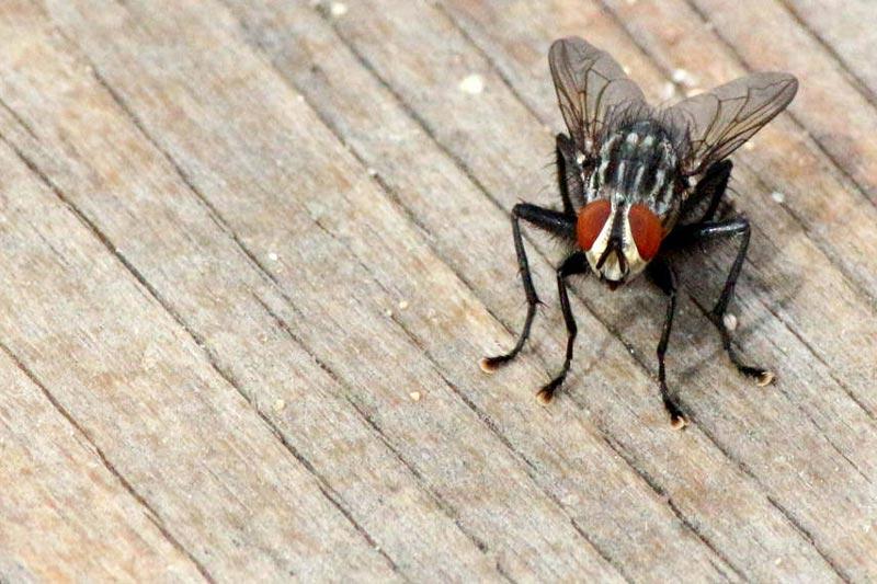 Flies' Goodbyes