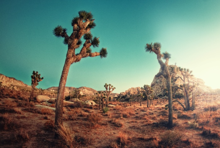 Sunday's Society6 - Aaron Morris, Joshua tree