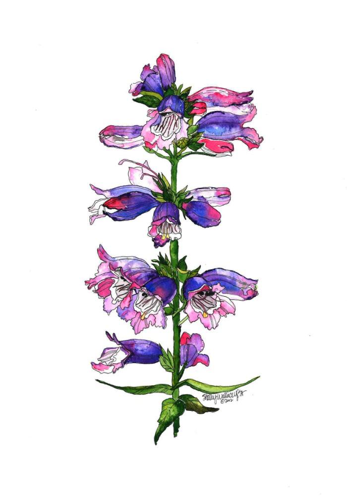 Sunday's Society6 flower