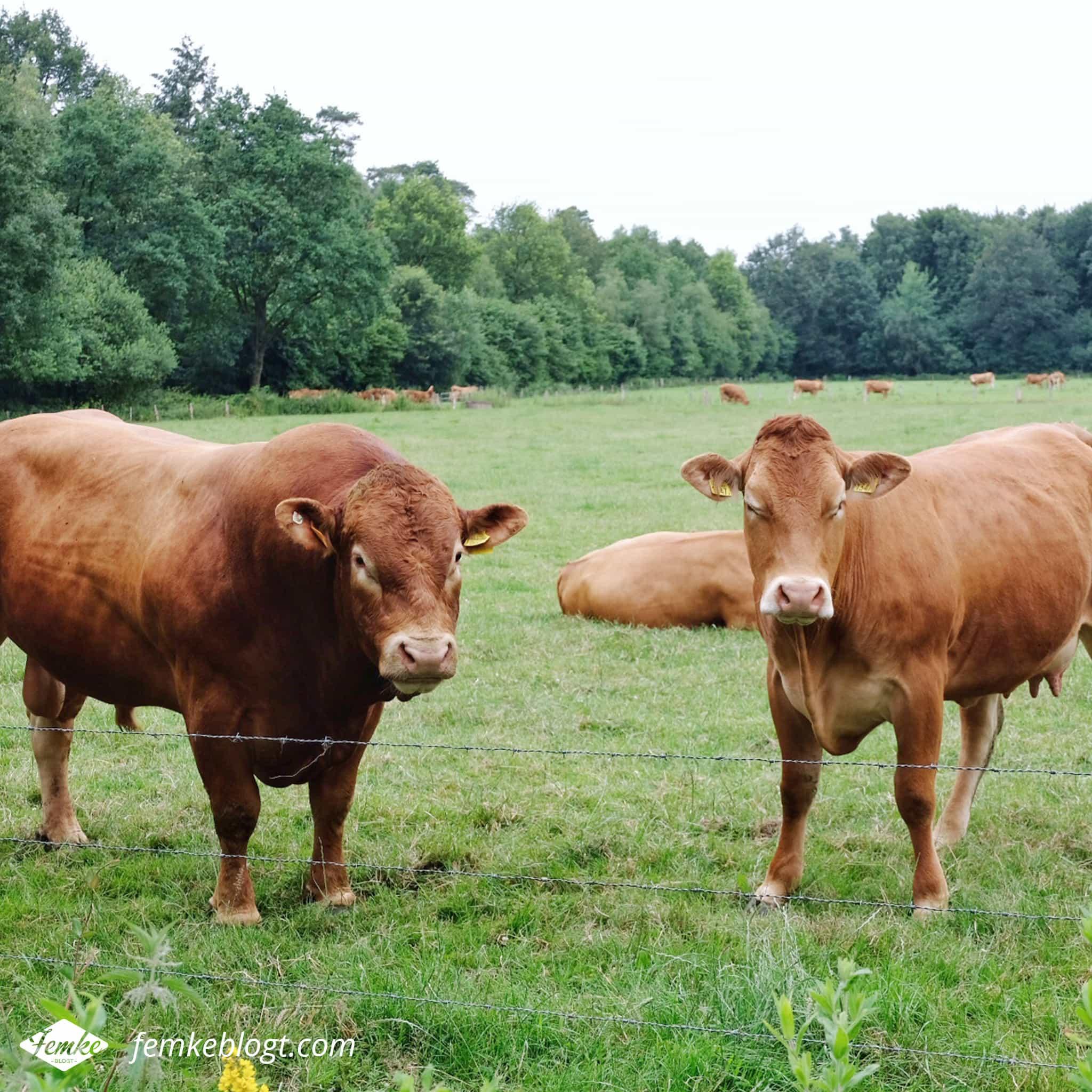 Maandoverzicht juni | Marskramerpad wandeling, Bad Bentheim naar Oldenzaal