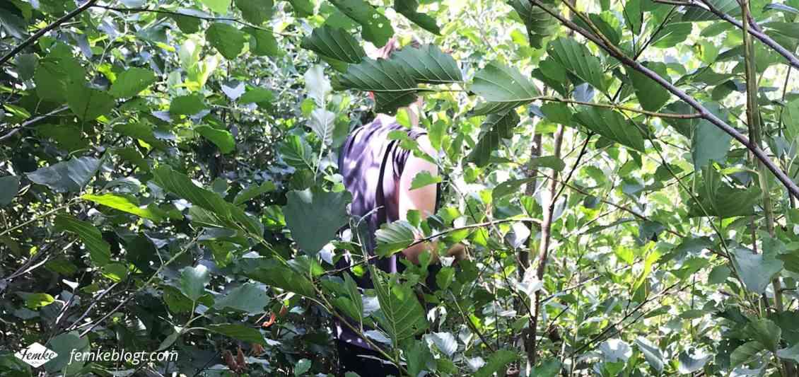 Maandoverzicht augustus | Groene vingers en een jungle wandeling