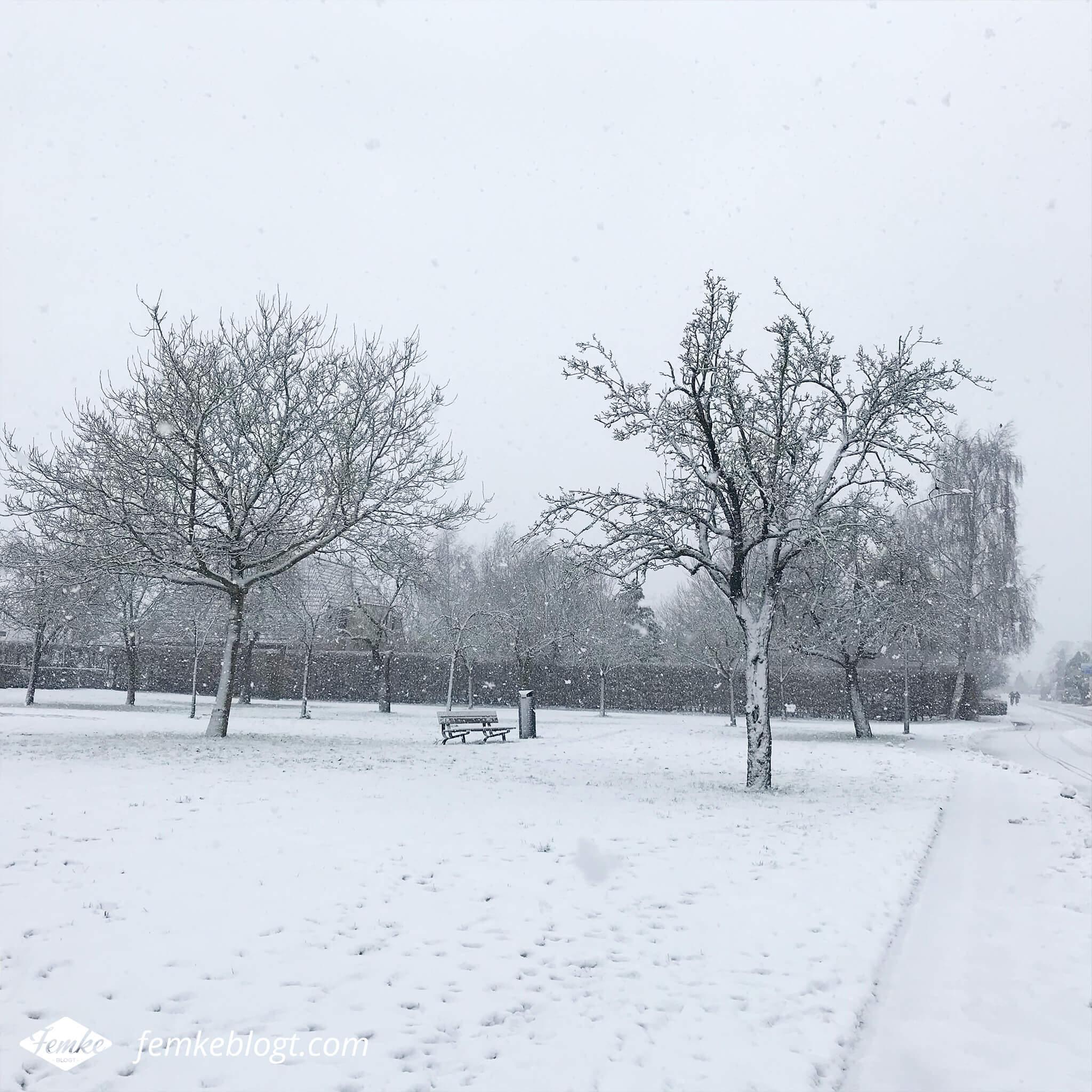 Maandoverzicht december | Sneeuw in Nederland, dus tijd voor een winterse wandeling!