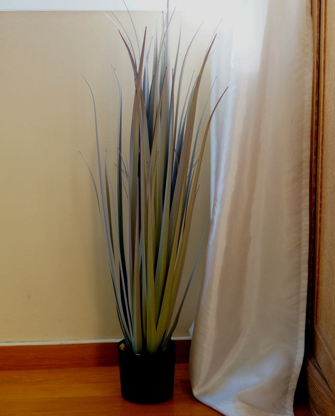 A plant of grey green leaves in pot to decorate your space, for indoors.