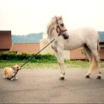 Feng_Shui_dog_month_horse_year