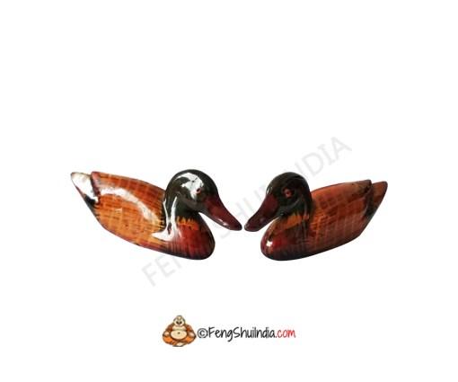 Mandarin Ducks for Love