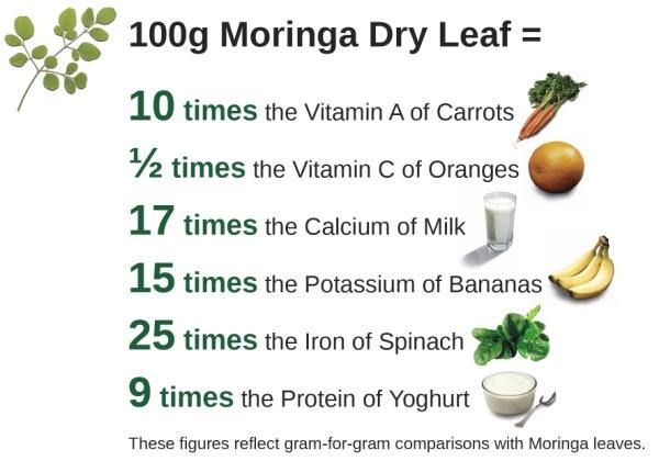 Moringa Leaf Tea Benefits | Jidileaf co