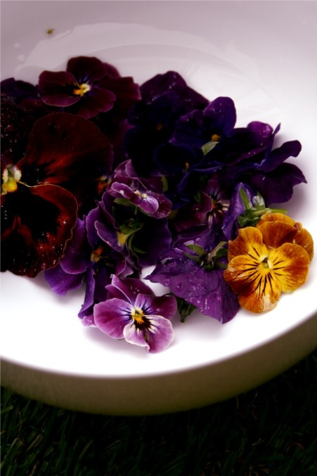 edible viola flowers for viola jelly
