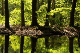 Trees in the Waterloopbos