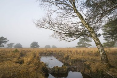 """Landscape with mist and a hole to dig peat at national park """"de Groote Peel"""" in the Netherlands"""