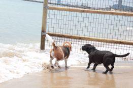 Playas para perros en Barcelona