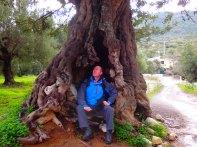 alter Baum kreta