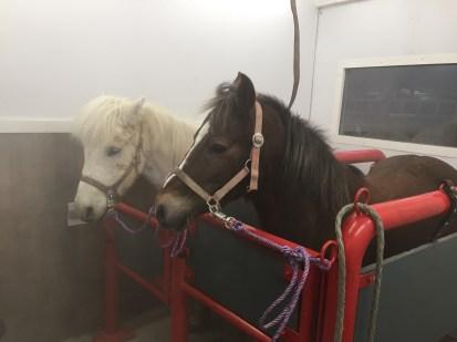 Behandlung der Pferde