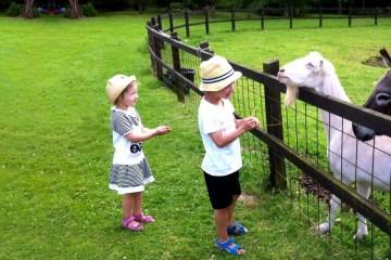 Hoftiere, Ferienhof Tiere, Kinderurlaub, Urlaub Tiere, Bauernhof Urlaub