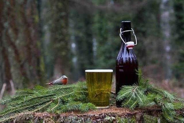 spruce-beer