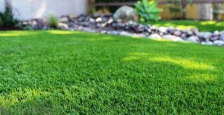 Как посеять газонную траву правильно?