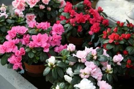 Живые Цветы Фото И Названия